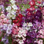 Top 10 perennial plants