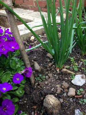 Gardening adventure - gardening beginner!