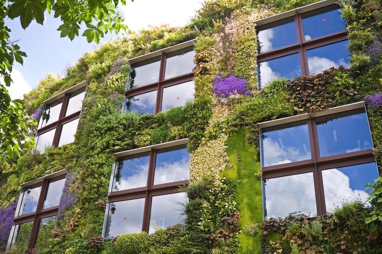 Living wall surrounding windows