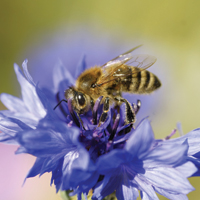 How to encourage bees into your garden