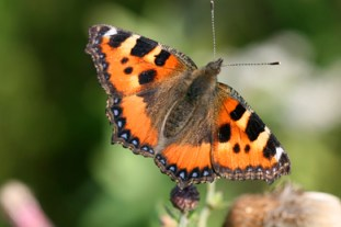 Gardening news - acute oak decline, slugs devouring wildflowers