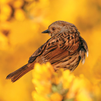 Gardening news - sparrows, winter bedding, legionella outbreak