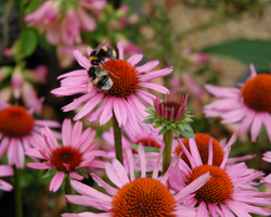 Gardening news - autumn planting, bees and butterflies