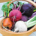 Top 5 flower and vegetable seeds