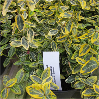 Variegation across the nation