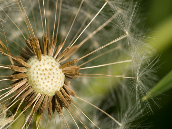 The war against weeds – Part 1