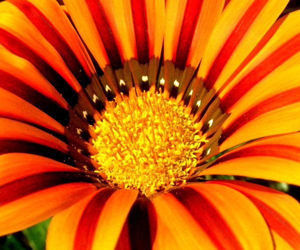 tikal plant