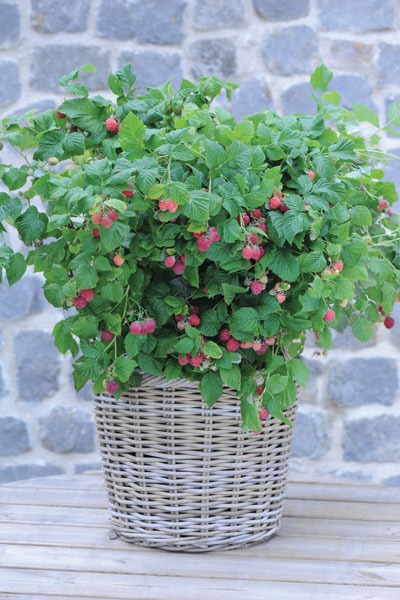 Raspberry surprise!