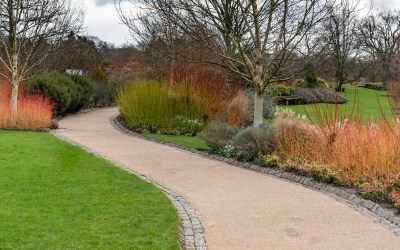 Best plants and flowers for winter colour