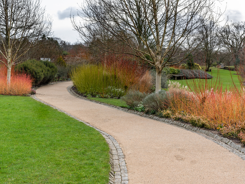 Garden in the winter with cornus and other winter-flowering plants and shrubs
