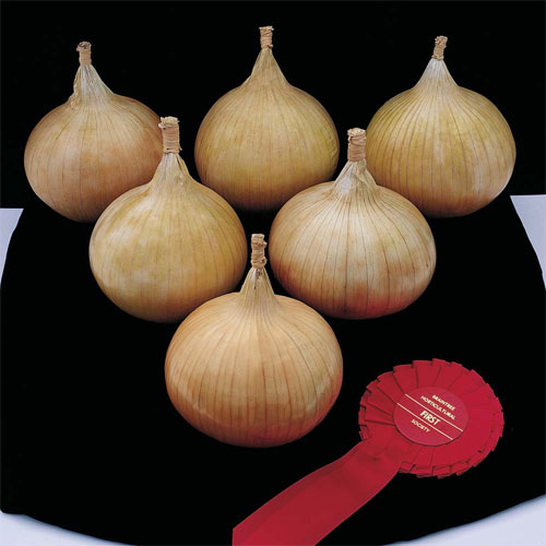 onion showstopper