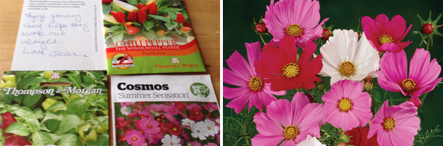 Seed packets and Cosmos 'Sensation Mixed'