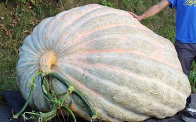 RHS gardener sows seed of hope for UK record-breaking pumpkin