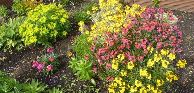 Jean Willis' back garden