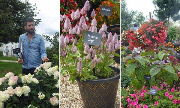 Plants at the Thompson & Morgan Open Garden