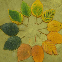 The changing colour of leaves from the garden