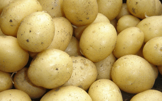 Potatoes – First earlies are great for beginners?