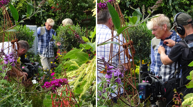 Geoff's garden with Buddleja 'Buzz® Magenta.' Film crew from Gardener's World