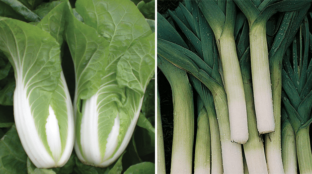 Cabbage Chinese 'Natsuki' & Leek 'Autumn Giant 2 - Porvite