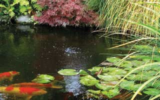 How to Choose The Best Plants to Compliment Your Pond