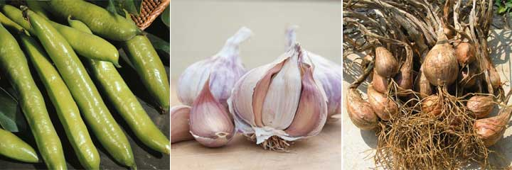 broad beans, garlic, shallots