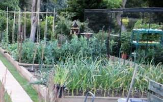 Chickens, slugs and clearing up the vegetable plot
