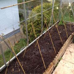 tomato frames in greenhouse