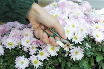 garden snips