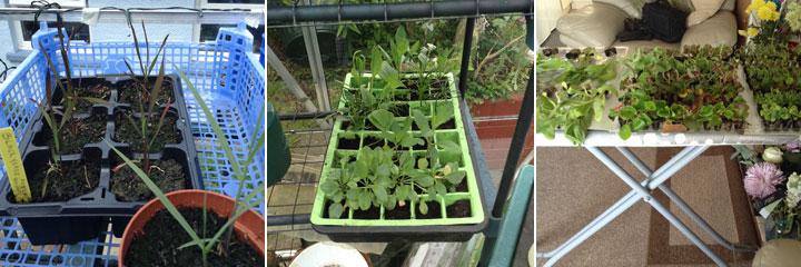 various seedlings june 2017