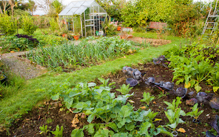 10 awesome allotment blogs