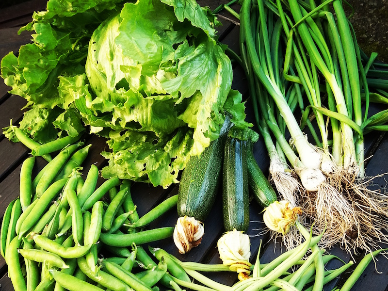 veg from the allotment diary's plot