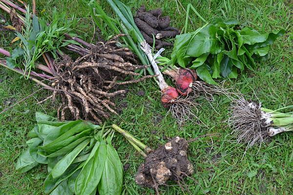 the backyard larder's soup veg