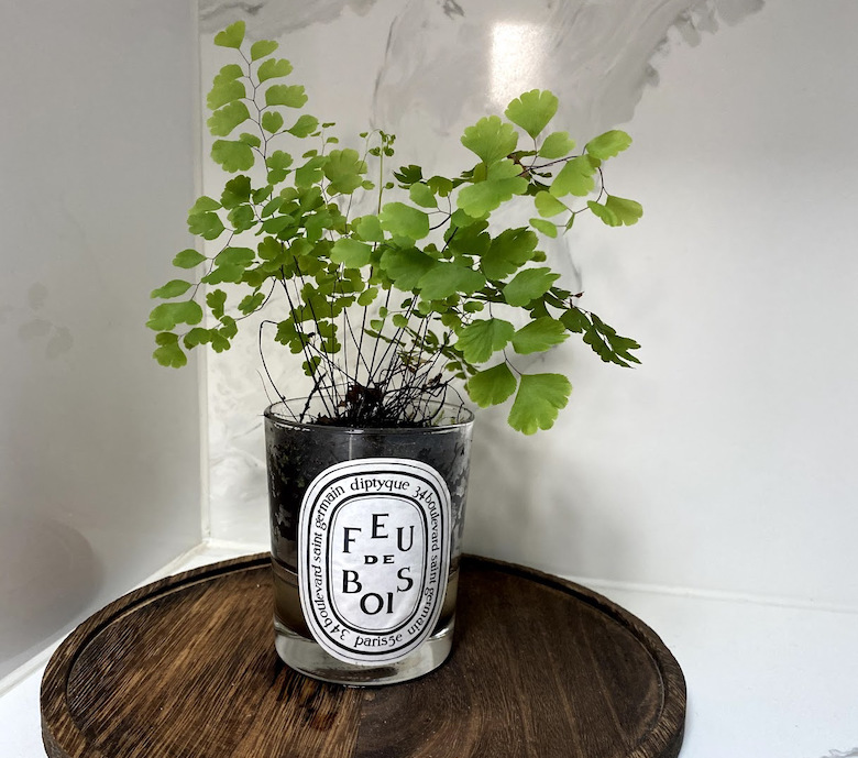 Maidenhair in a Diptyque candle