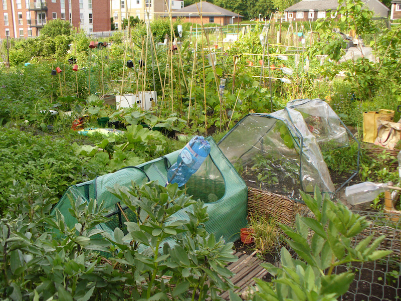 her outdoors allotment