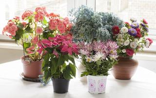 8 inspiring indoor garden blogs