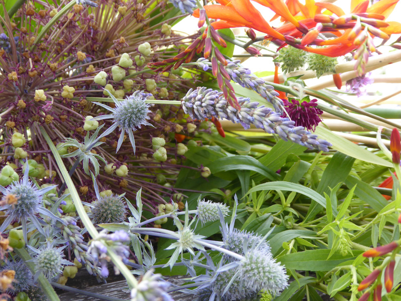 sallys garden blog