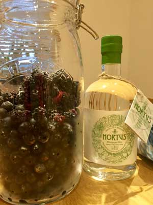 preparation, sloes, berries and gin