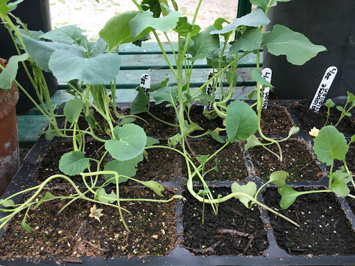 seedlings from the smallholding