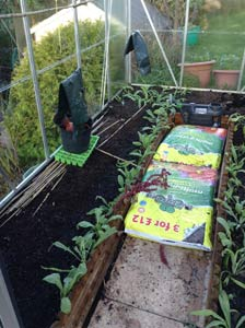 planted greenhouse bed - November 17