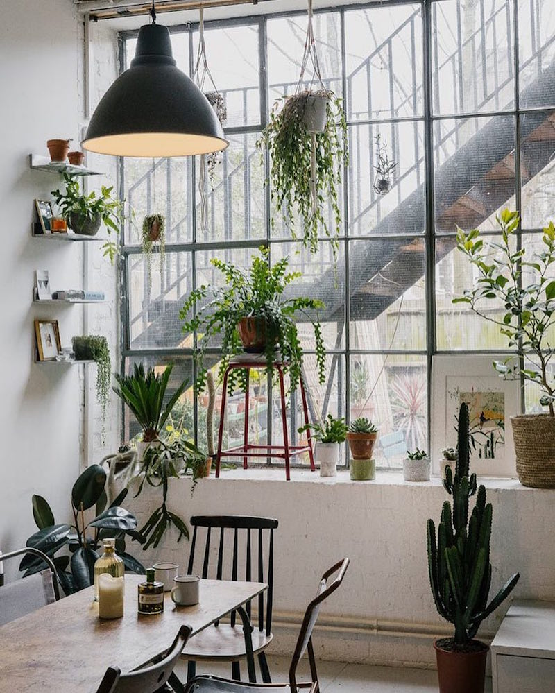 house of plants instagram