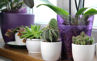 9 top houseplant Instagram feeds