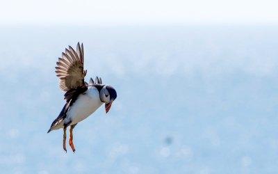 10 Brilliant Bird Watching Blogs