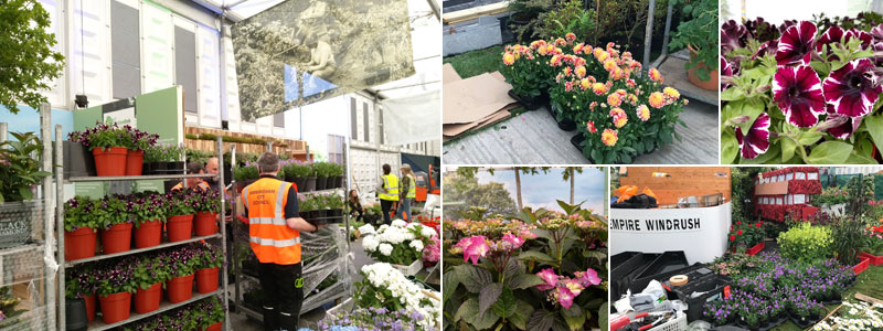 unloading the plants - Road to Chelsea