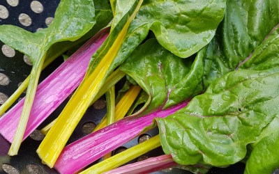 Grow Your Own – Colourful Salads