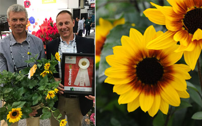 More Awards for T&M's Sunflower SunBelievable™ 'Brown Eyed Girl'