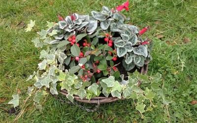 Winter hanging baskets – planting ideas