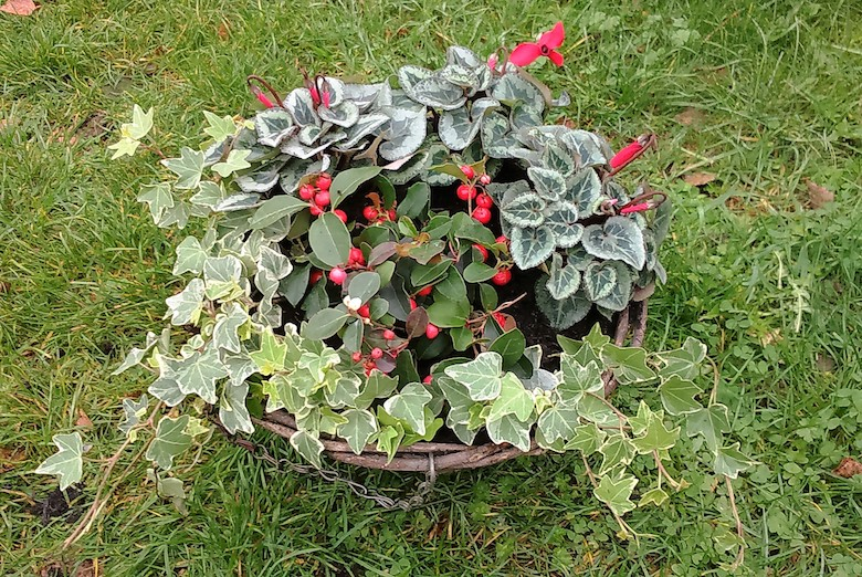 Winter hanging baskets – planting ideas