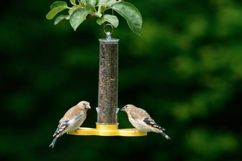 two wee birds on the feeder