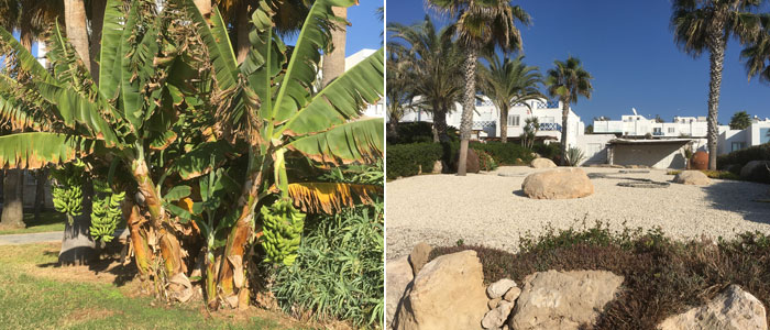 A banana palm and a contemporary seaside garden