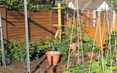 Pruning and planting soft fruit